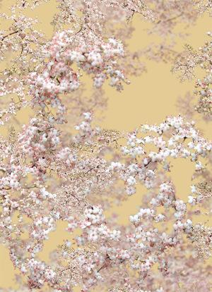 jakob_schlaepfer_textil_print_flowers_03