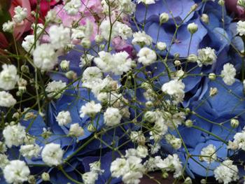 jakob_schlaepfer_garden_flowers