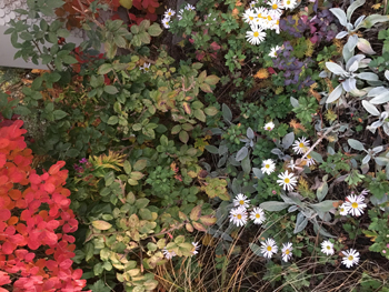 jakob_schlaepfer_impression_garden
